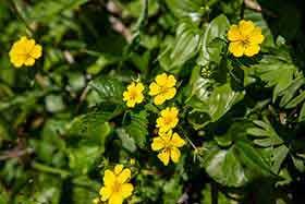 黄色い花も咲いてる