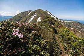 シャクナゲを見ながら仙ノ倉山へ