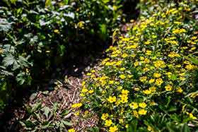 黄色の花がいっぱい