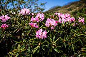平標山との間も花だらけ