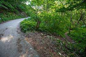 舗装路から林の中へ