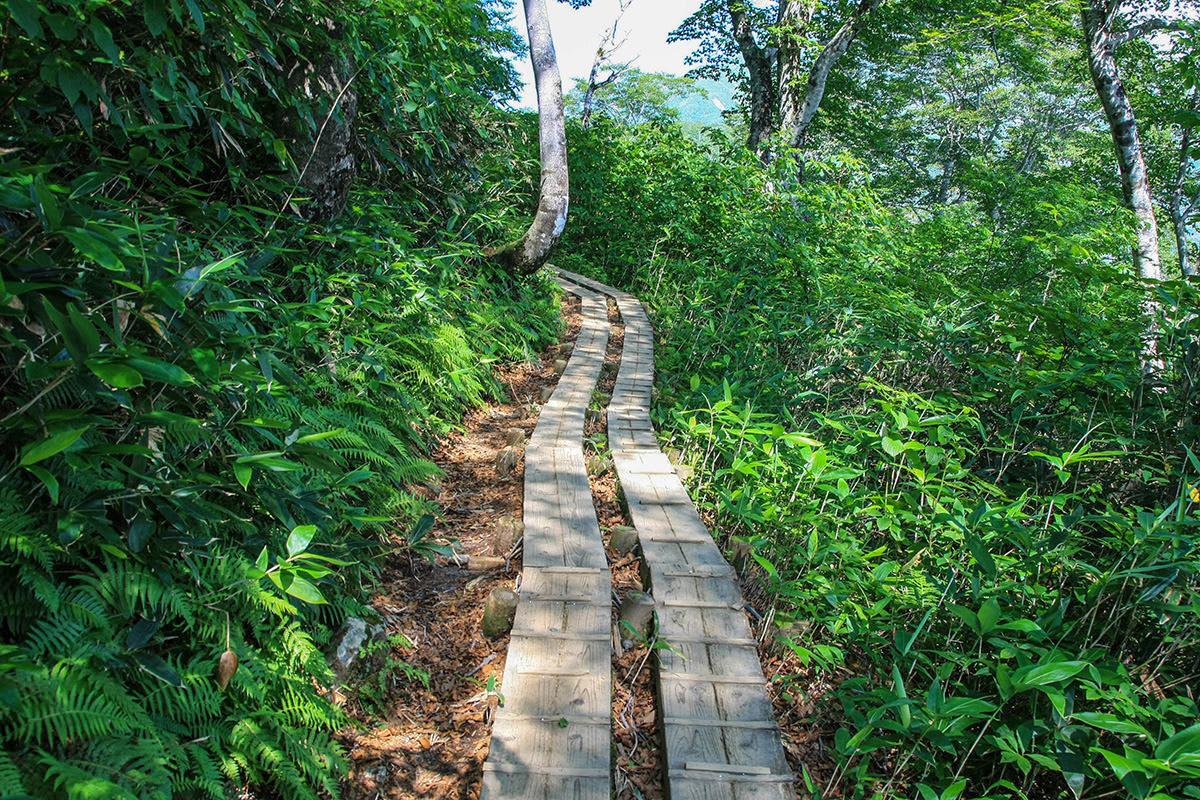 【谷川岳】登山百景-しばらく歩きやすい