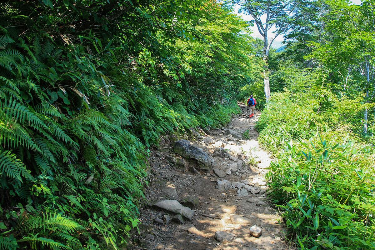 【谷川岳】登山百景-緩やかな坂に変わった