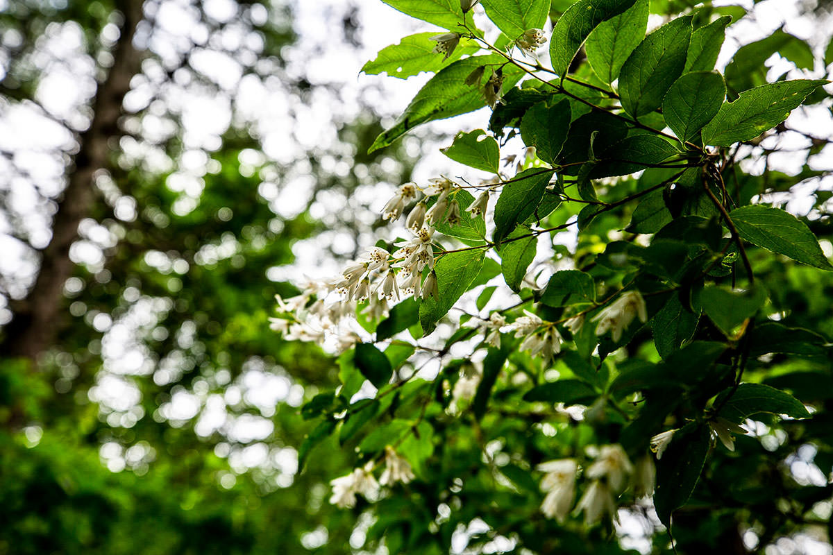 【太郎山】登山百景-花は少しだけ