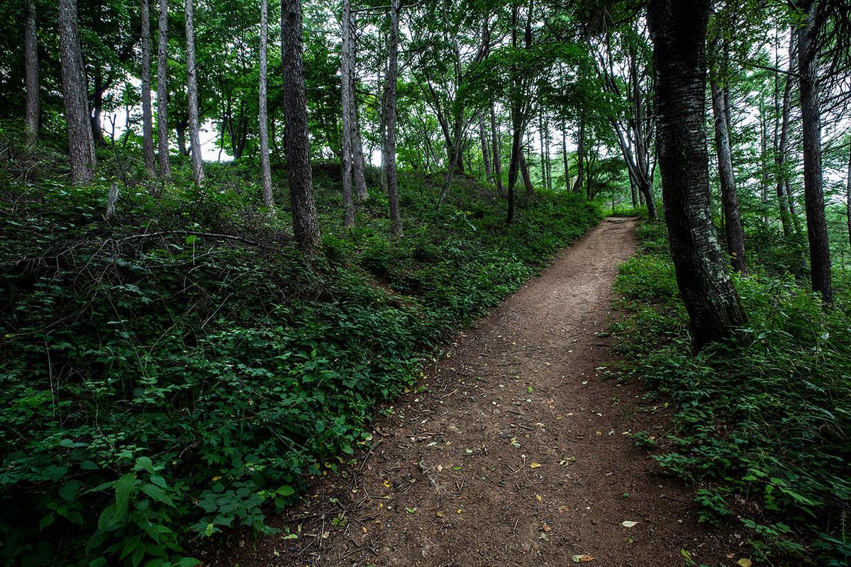 【太郎山】登山百景-稜線はすぐそこ