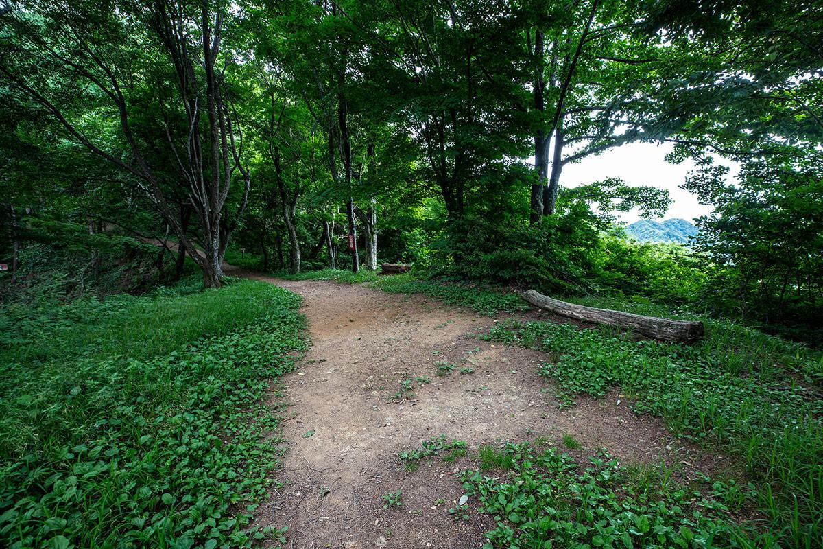 【太郎山】登山百景-分岐点は平ら