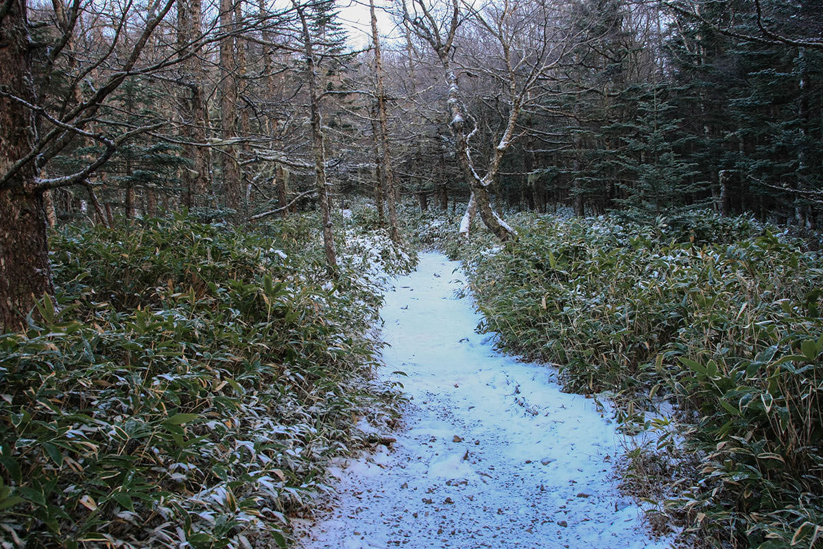 最初から雪道