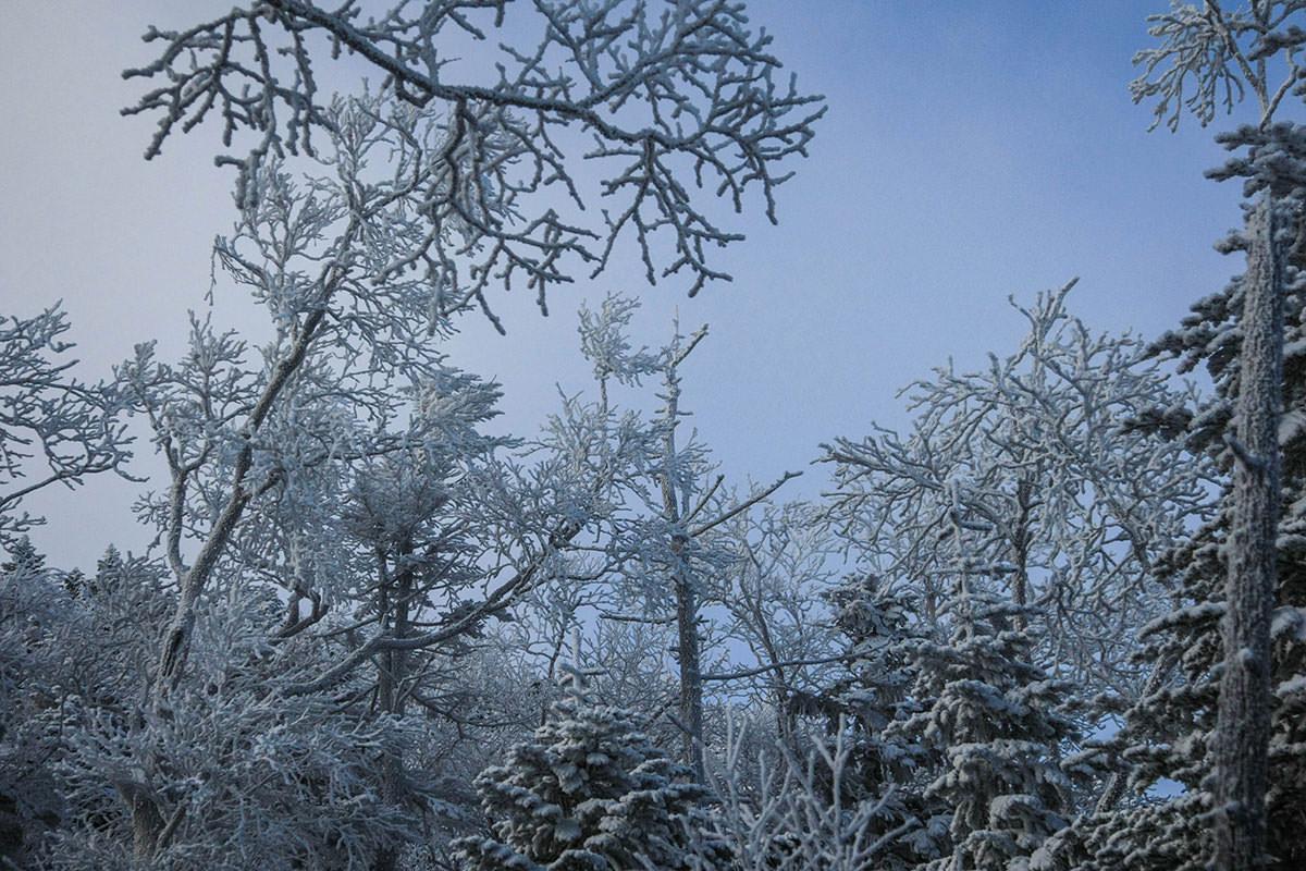 霜が大きい