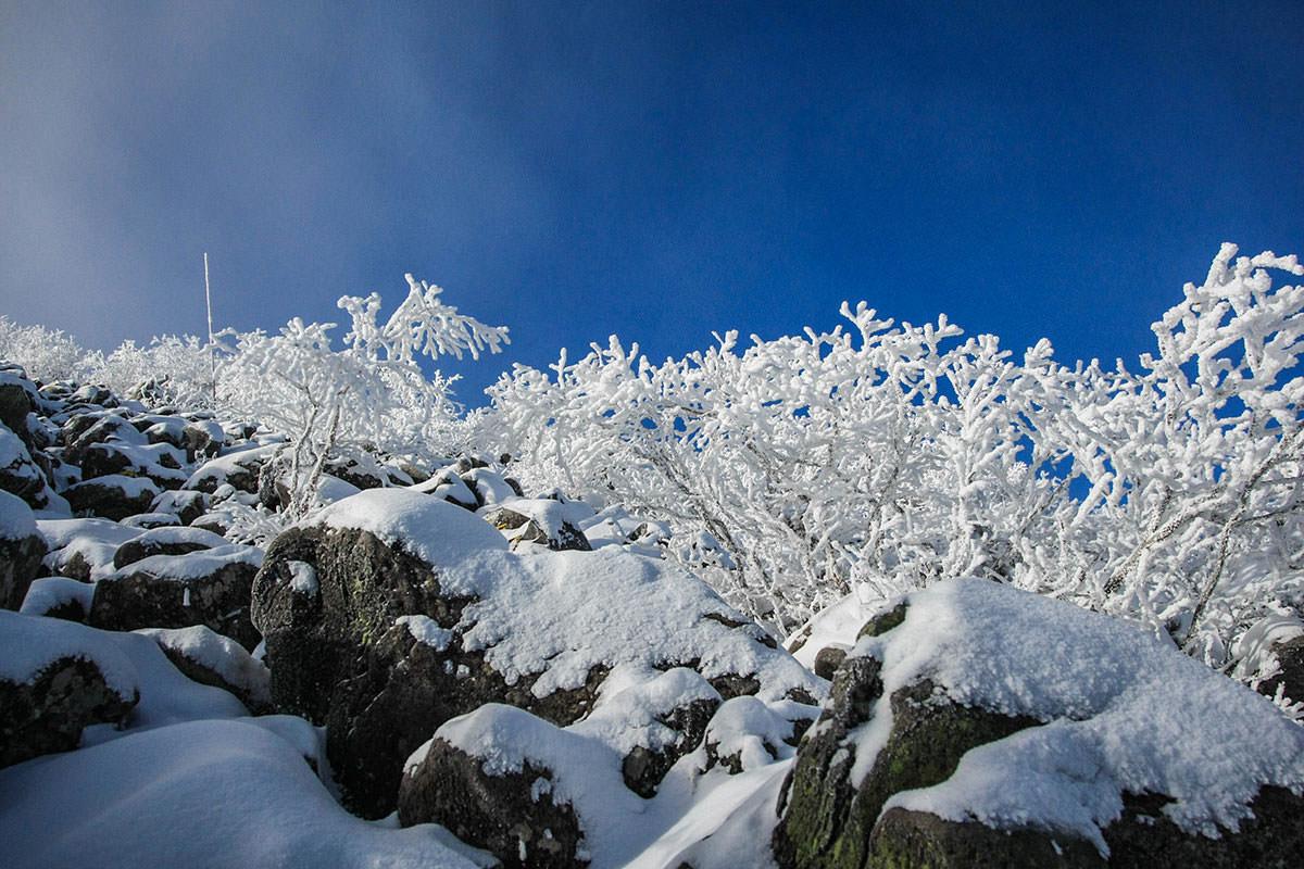 枝には雪が着いている