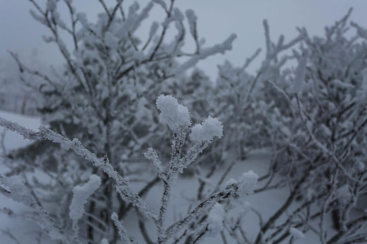 枝の先に雪