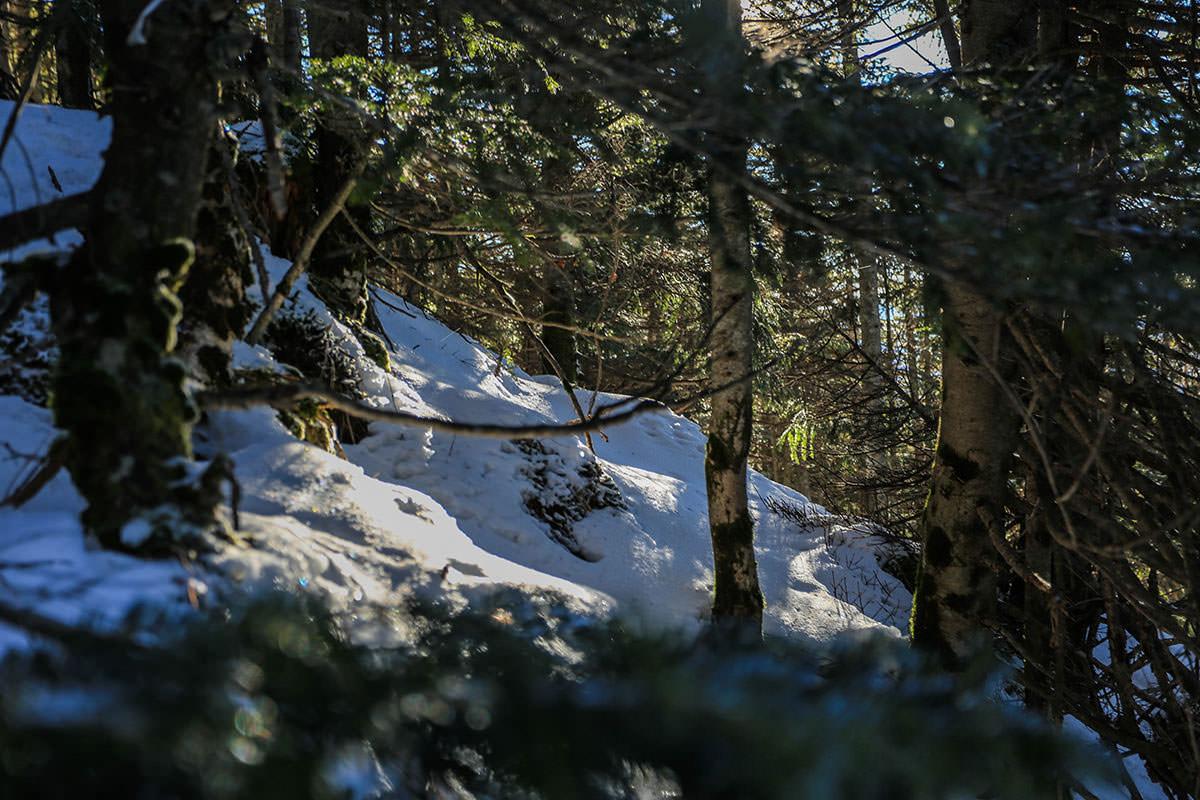 【蓼科山】登山百景-木の陰でキラキラしてた