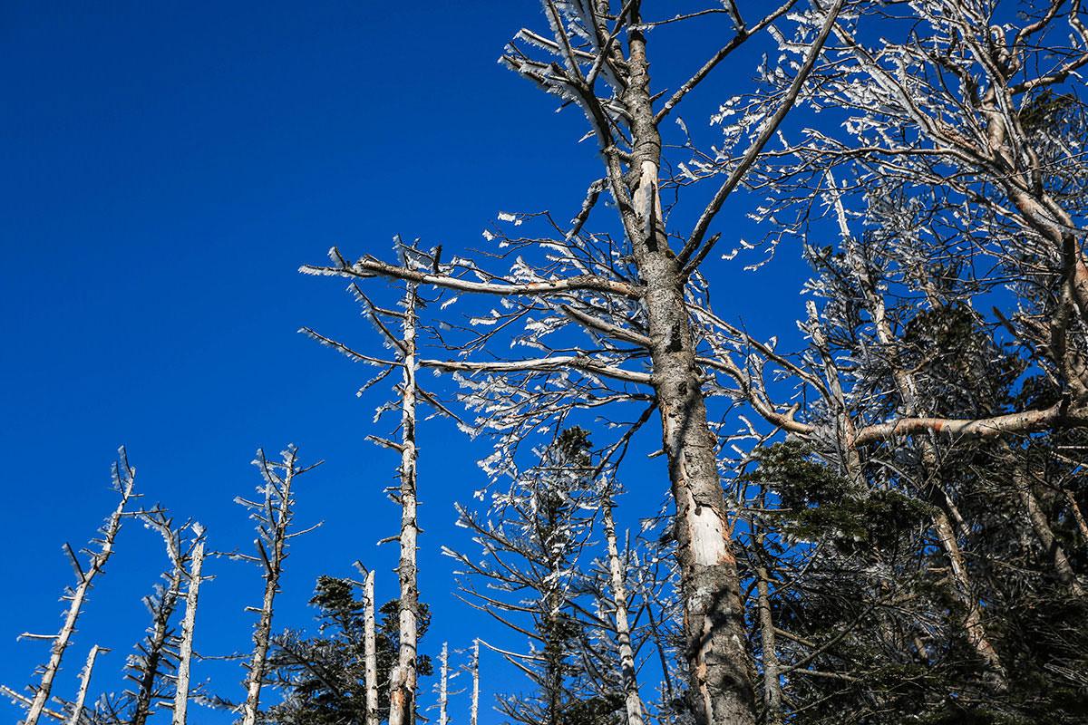 【蓼科山】登山百景-木の枝が凍っている