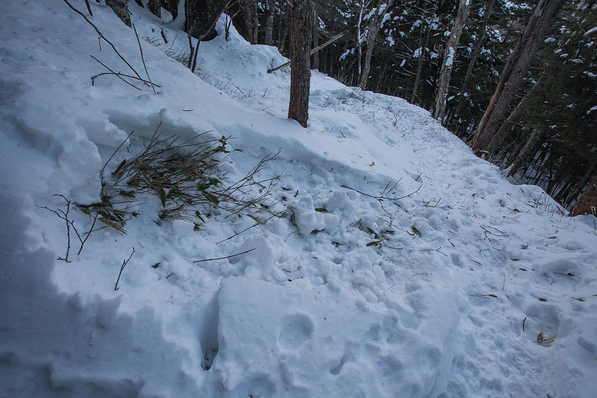 【蓼科山 竜源橋】登山百景-鹿が掘ったと思われる場所