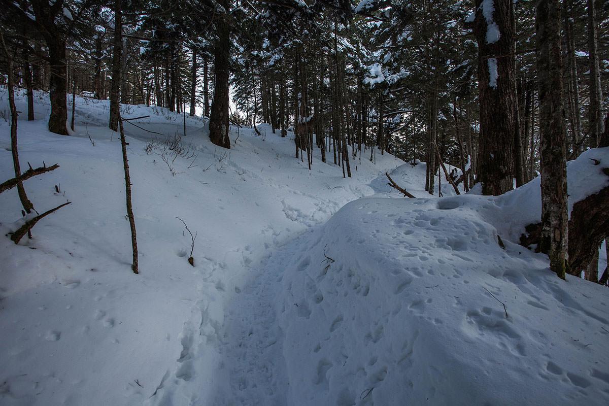 【蓼科山 竜源橋】登山百景-木の間を歩く