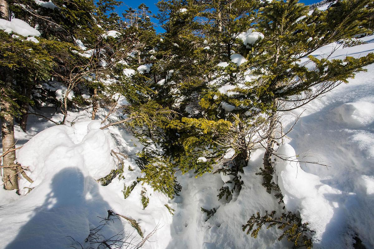 【蓼科山 竜源橋】登山百景-登山道は枝だらけ