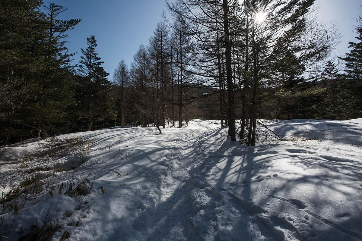 ゲレンデ横の樹林帯