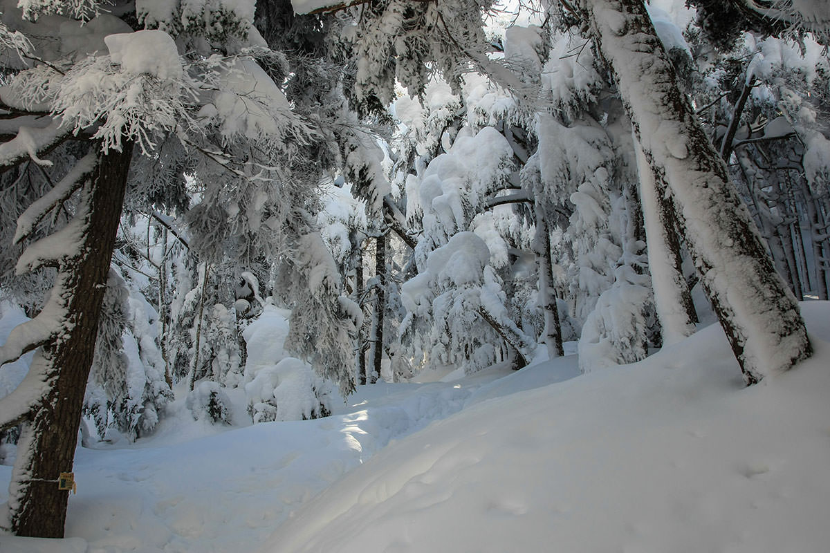 雪が深くなる