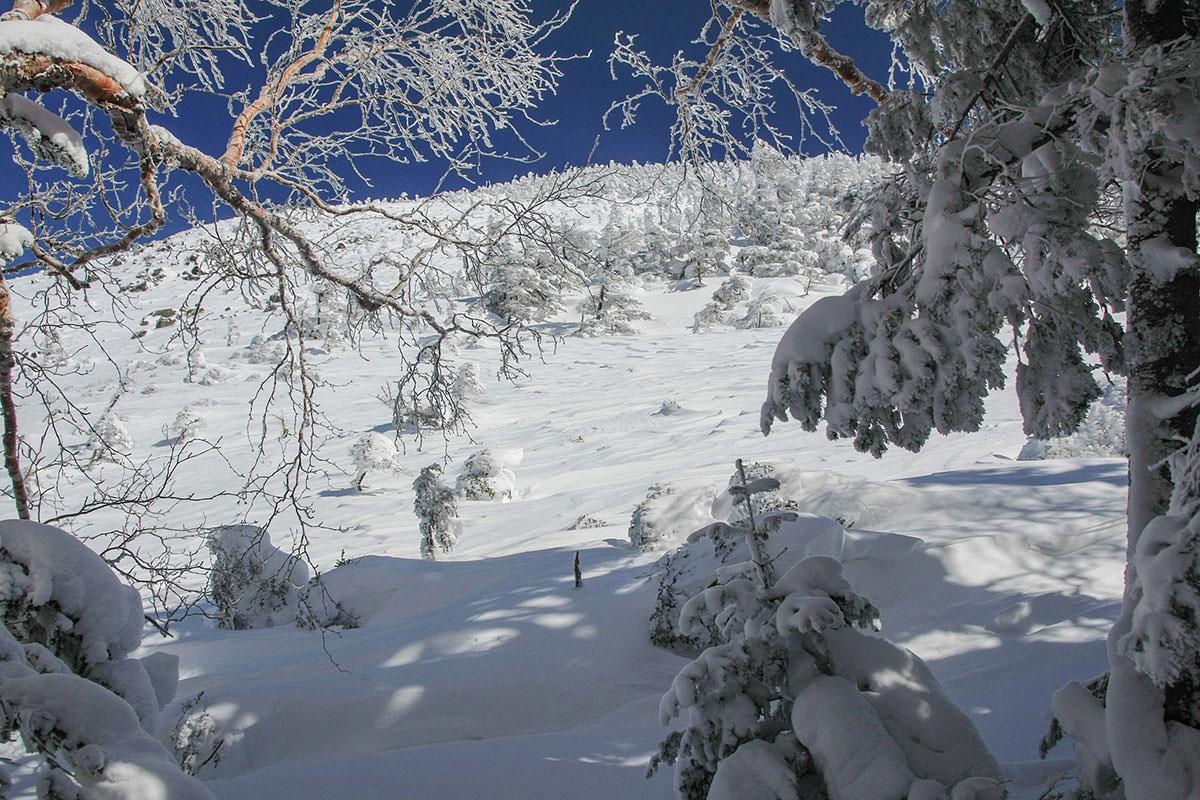 木の隙間からの景色