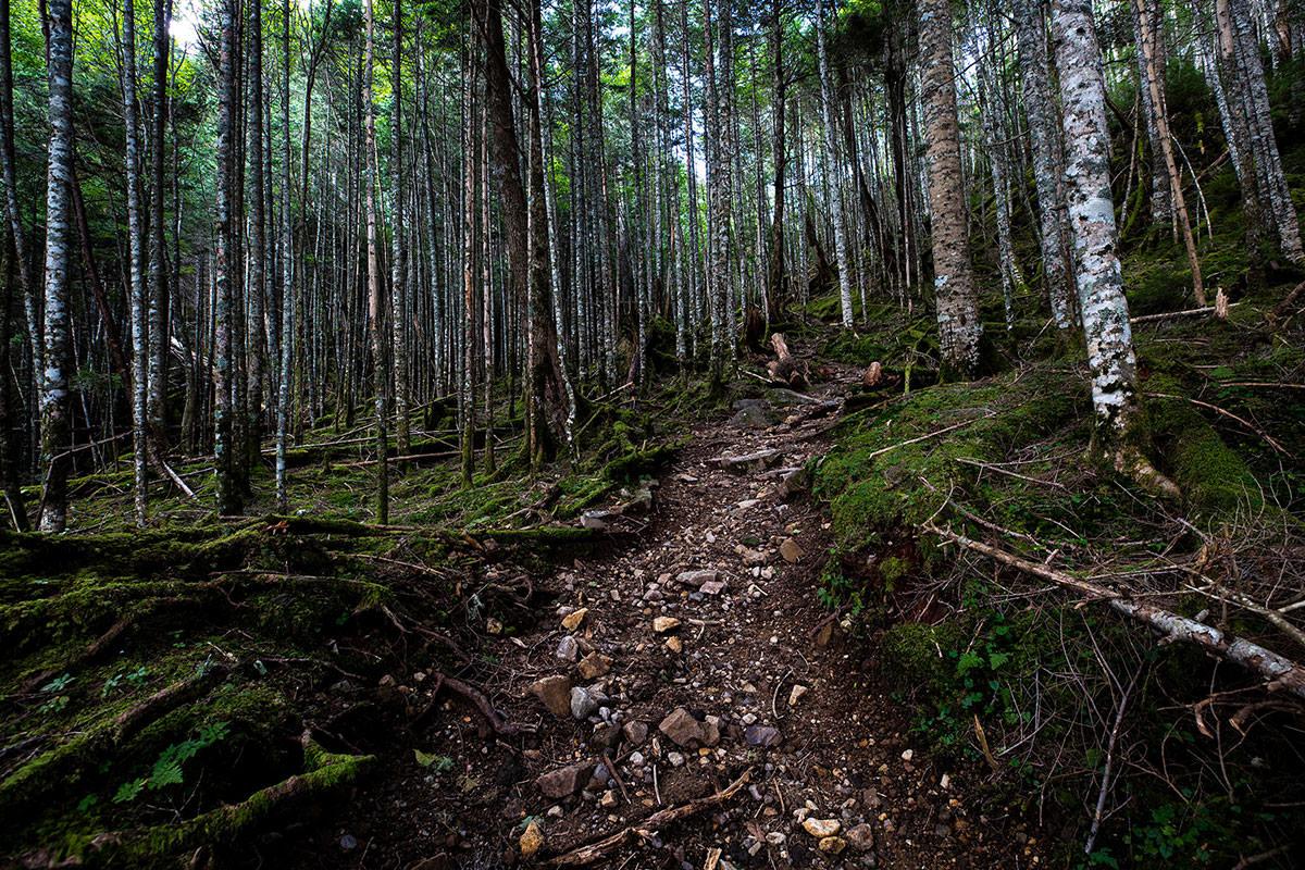 【天狗岳】登山百景-樹林帯が厚くて暗い