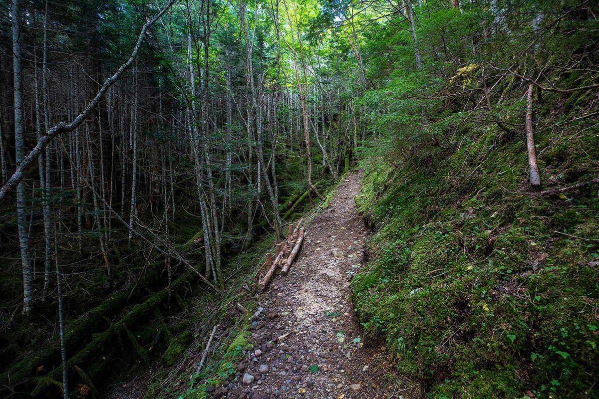 【天狗岳】登山百景-歩きやすい道が多い