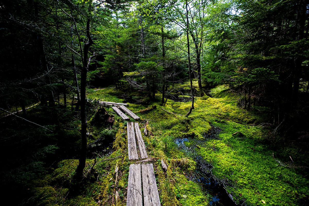 【天狗岳】登山百景-苔の緑がいっぱい