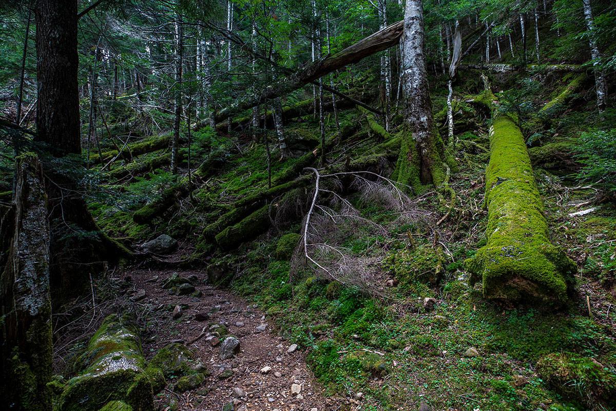 【天狗岳】登山百景-緑と茶色だらけ