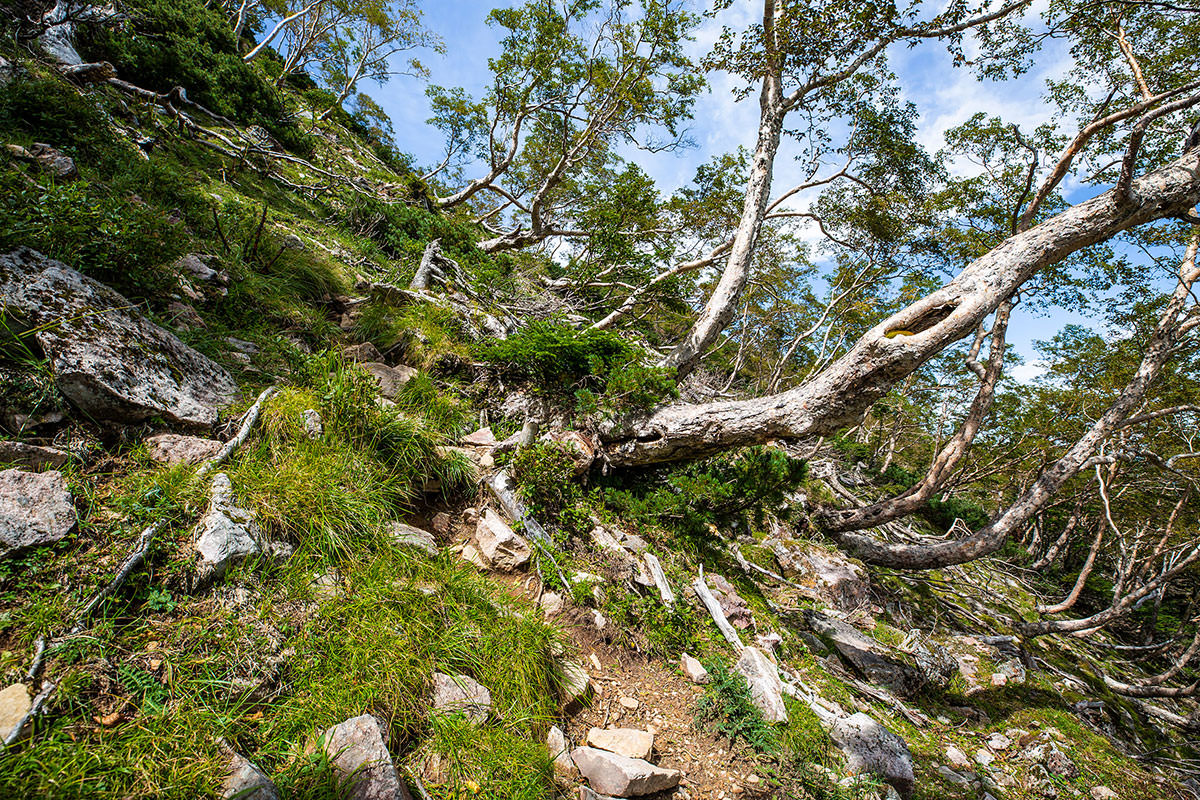 【天狗岳】登山百景-樹林帯の終わりが近づいてきた