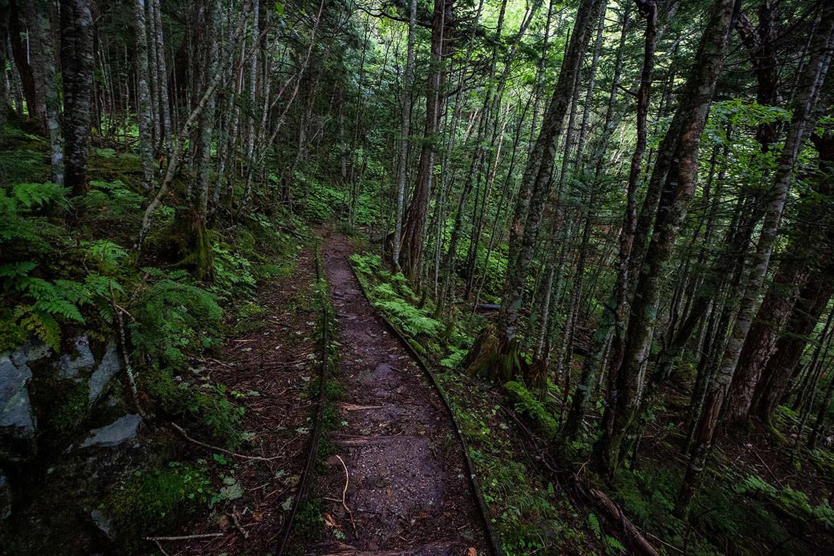 【天狗岳】登山百景-レールを追っていく