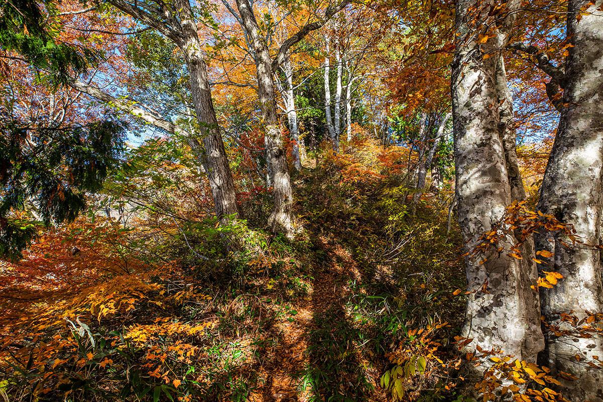 【戸隠西岳】登山百景-紅葉の細尾根を登る