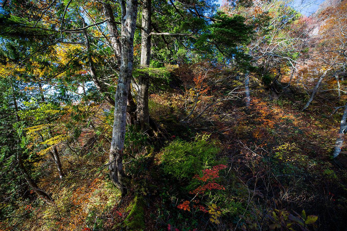 【戸隠西岳】登山百景-木がいっぱい