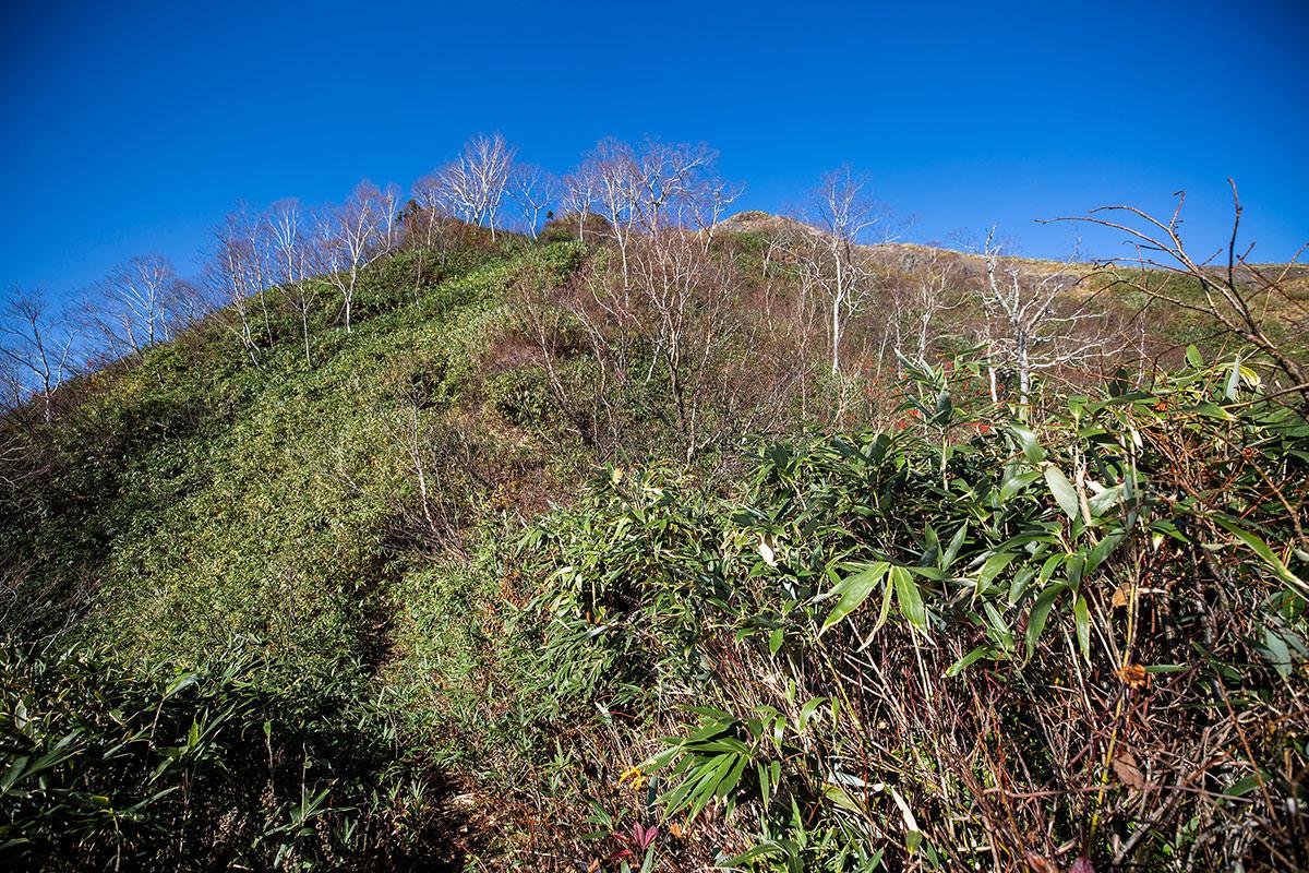 【戸隠西岳】登山百景-笹の先にP1が見える