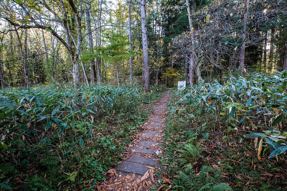 【戸隠西岳】登山百景-参道から遊歩道へ