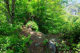 細尾根の登山道はちょっと外れると深い谷