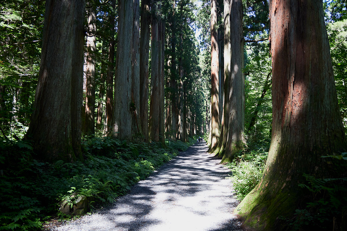 戸隠山-随神門から先は大きな杉の並木