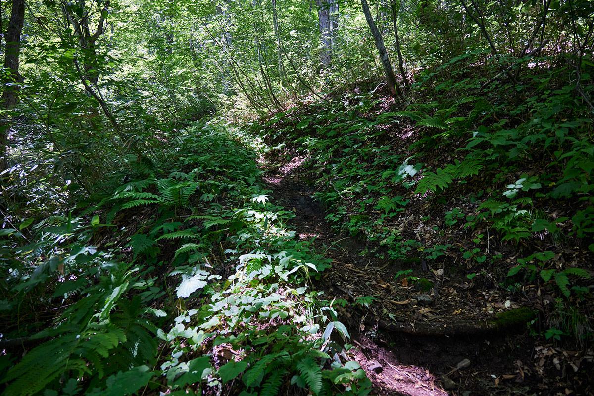 戸隠山-緑がいっぱいの急登