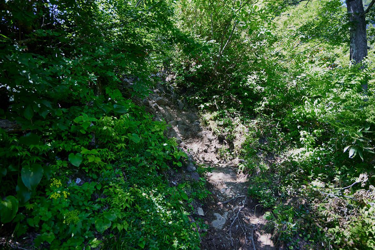 戸隠山-石の露出した急登