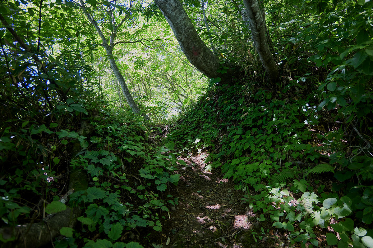 戸隠山-草木がいっぱいで暑い