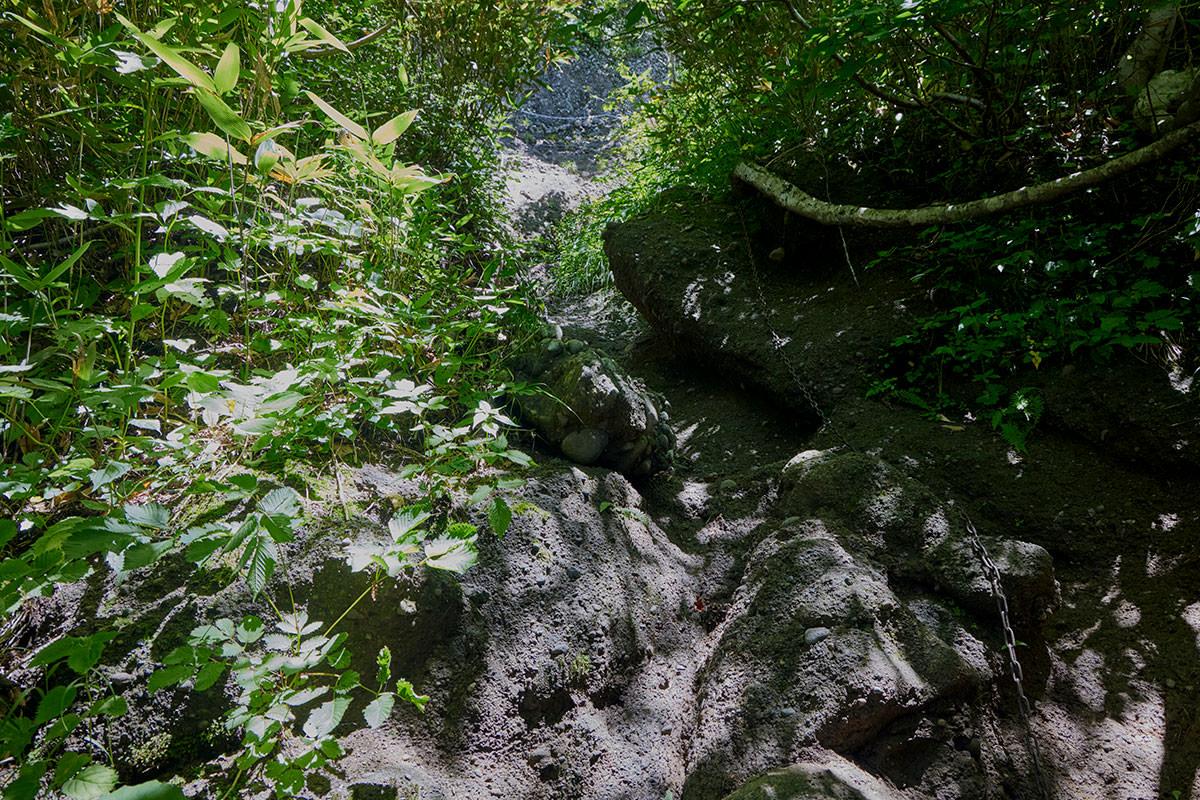 戸隠山-鎖場の上は緑のトンネル