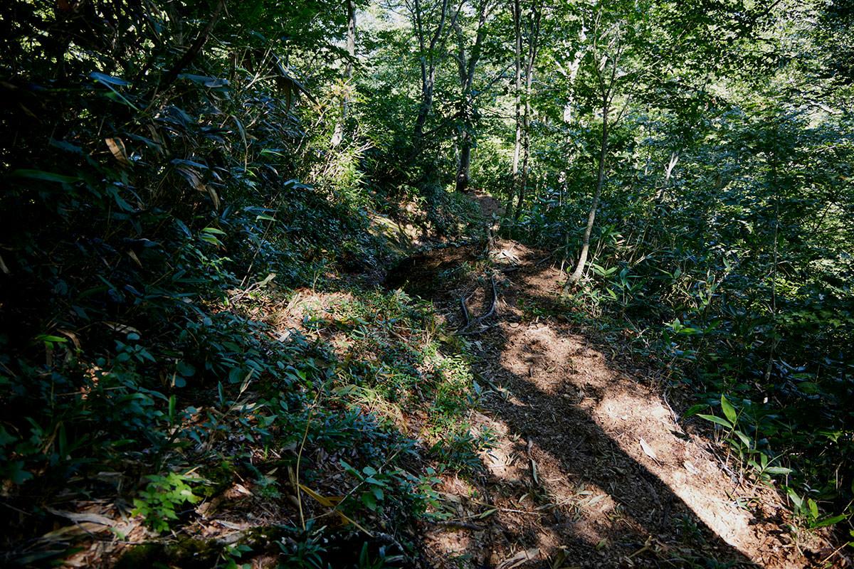 戸隠山-樹林帯を下りる