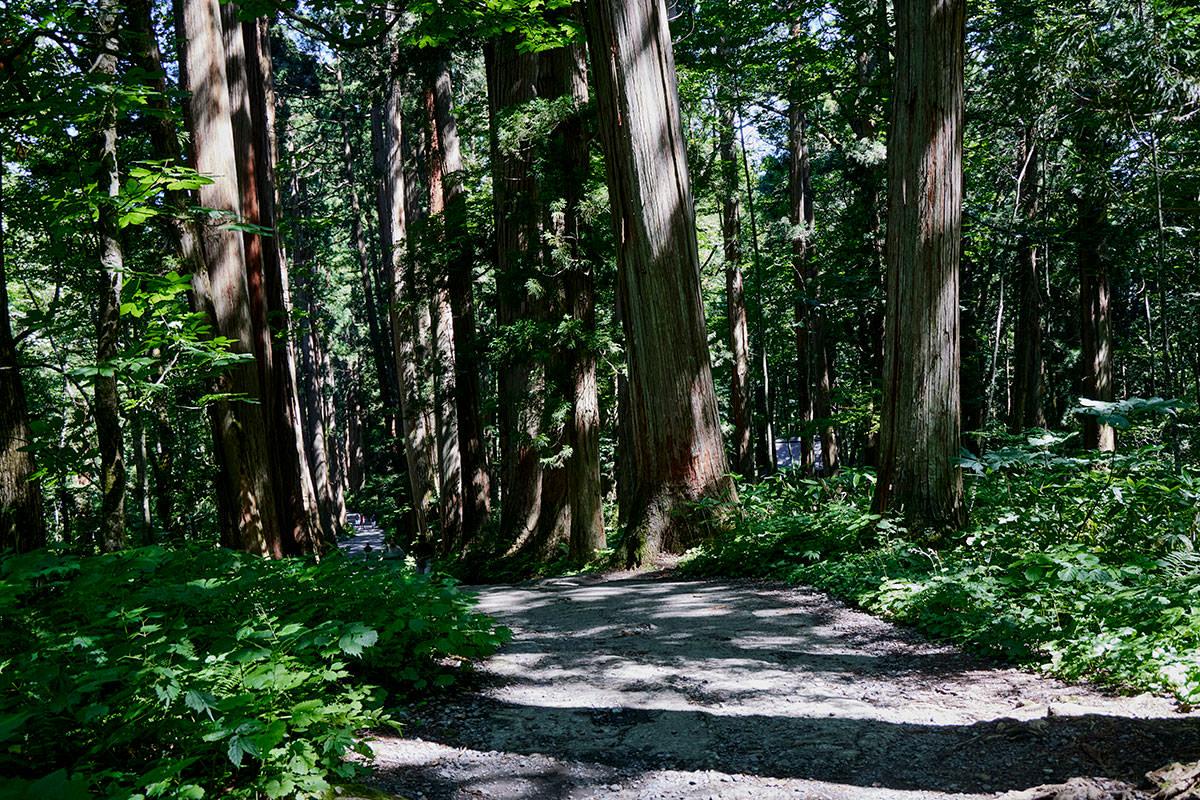 戸隠山-参道を下りていく