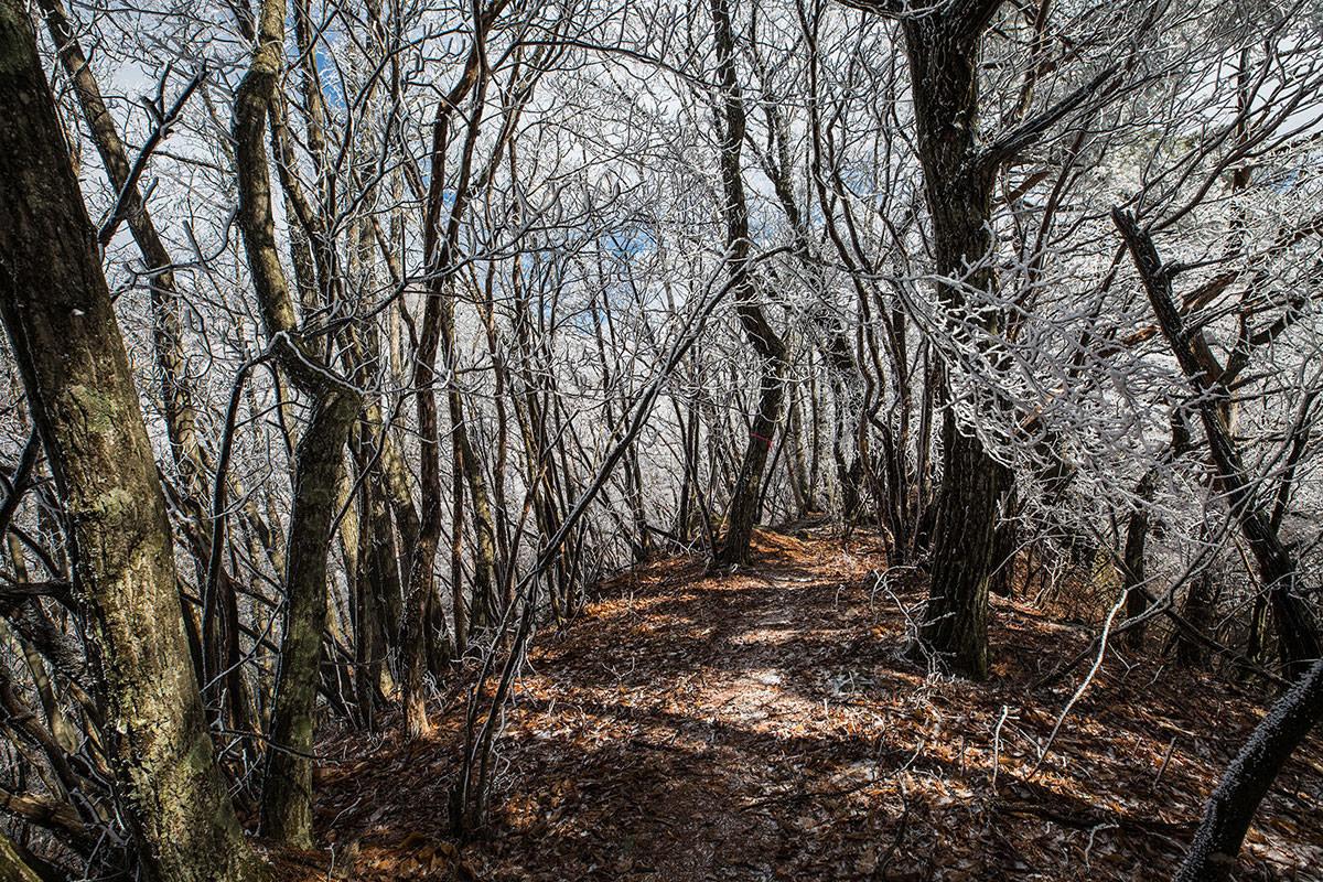 霧氷に囲まれて歩く