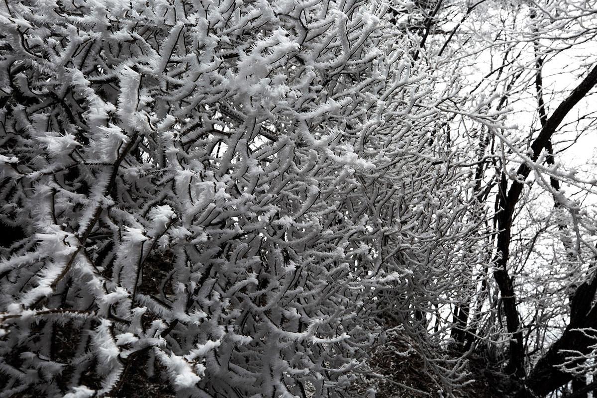 霧氷が登山道を塞いでる