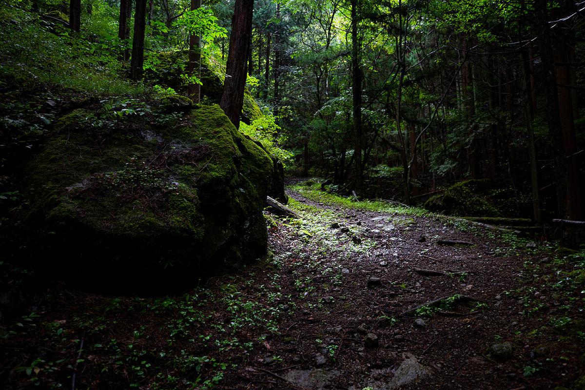 登山道は薄暗い