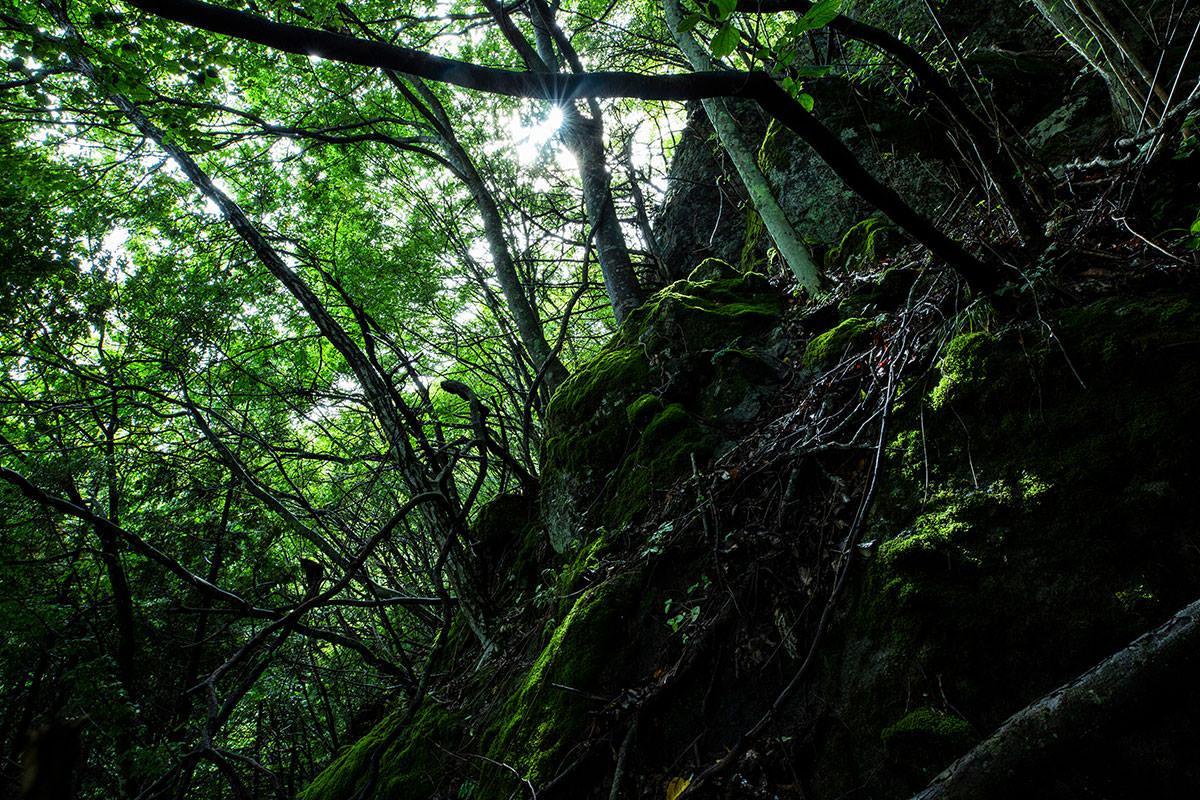 独鈷山-緑が綺麗