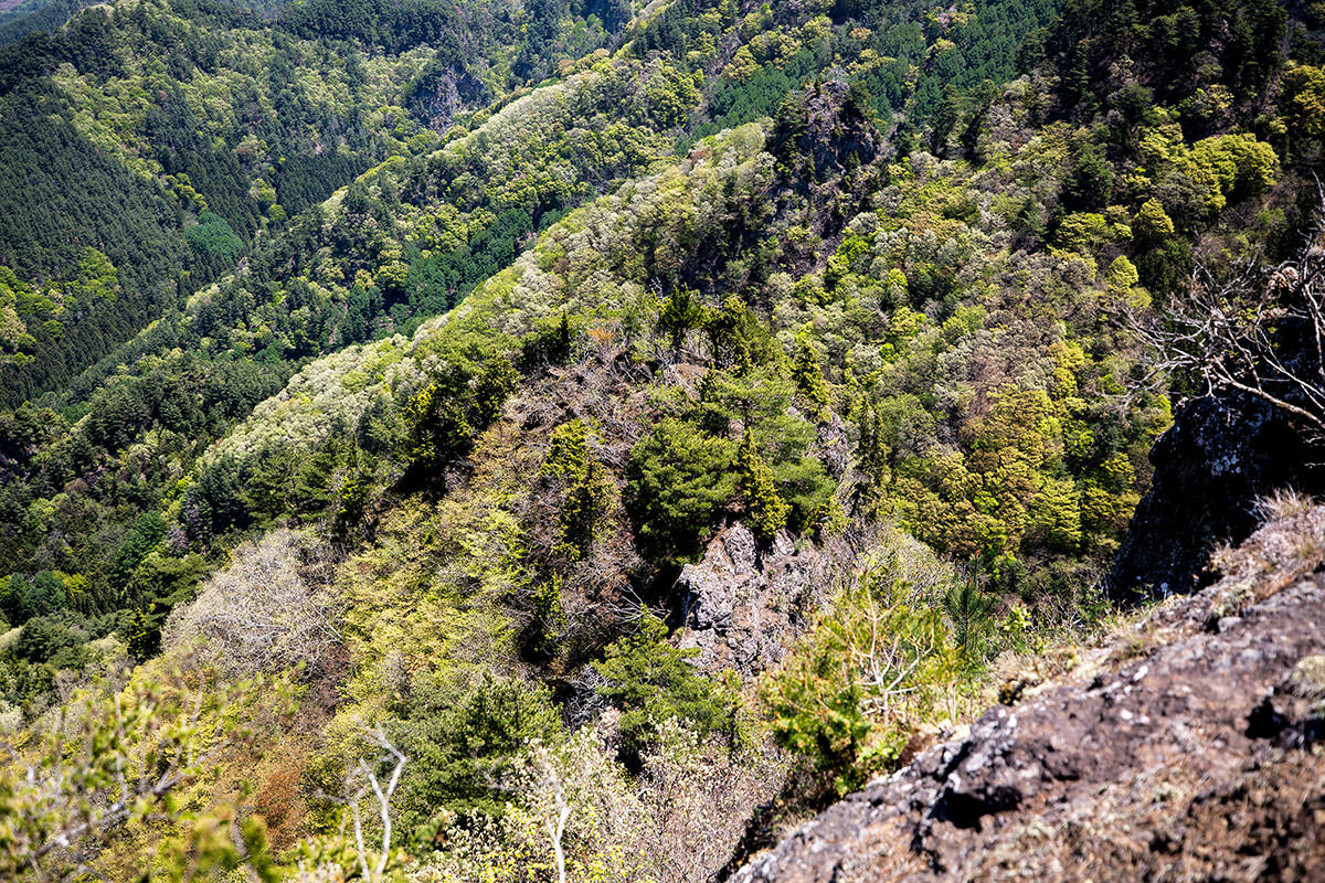 真下にある岩峰が緑に埋もれてる