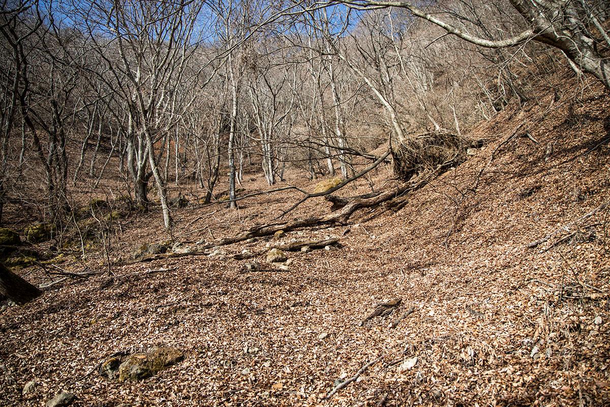 独鈷山-たぶんここだろう的な登山道