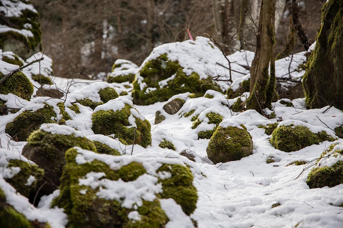 独鈷山-石に苔が生して緑