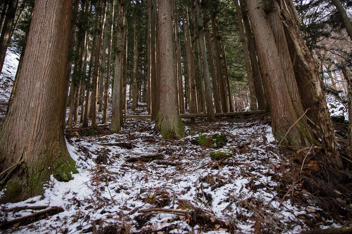 独鈷山-杉の中の急登
