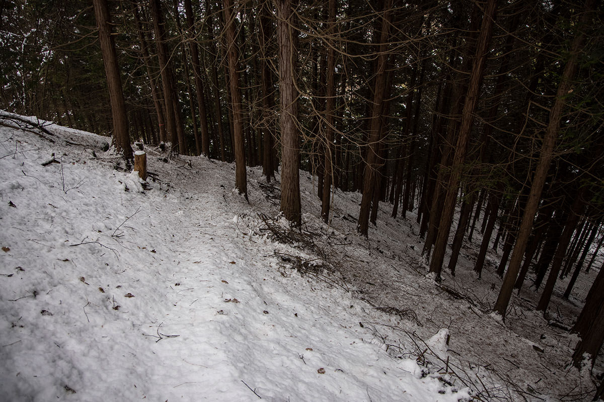 独鈷山-杉林まで下りてくると角度が緩くなる