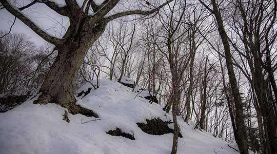 独鈷山 積雪期